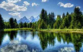 clouds conifer daylight evergreen